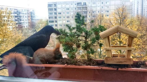 Der Plaste-Rabe hält die Tauben fern, Singvögel und Eichhörnchen sind einfach klüger