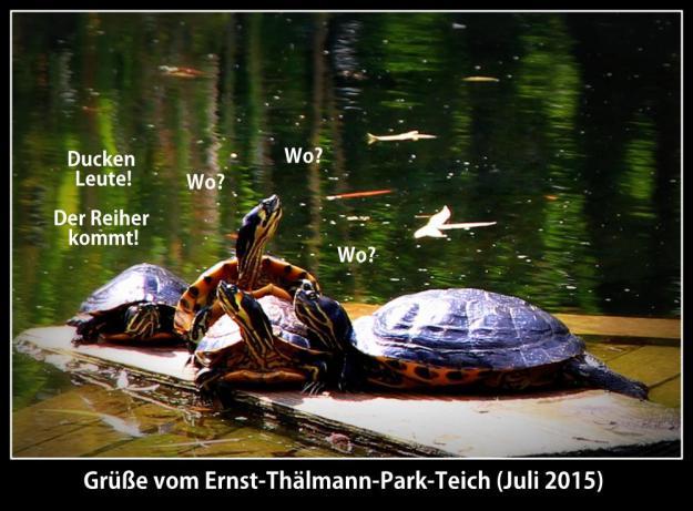 Grüße vom Ernst-Thälmann-Park-Teich (Juli 2015)